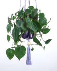 suspension.plante.macrame.bymadjo.Edmée.1