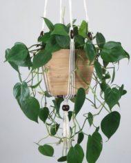 suspension.plante.bymadjo.Shanti.3