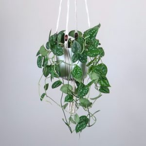 suspension macramé porte-plante