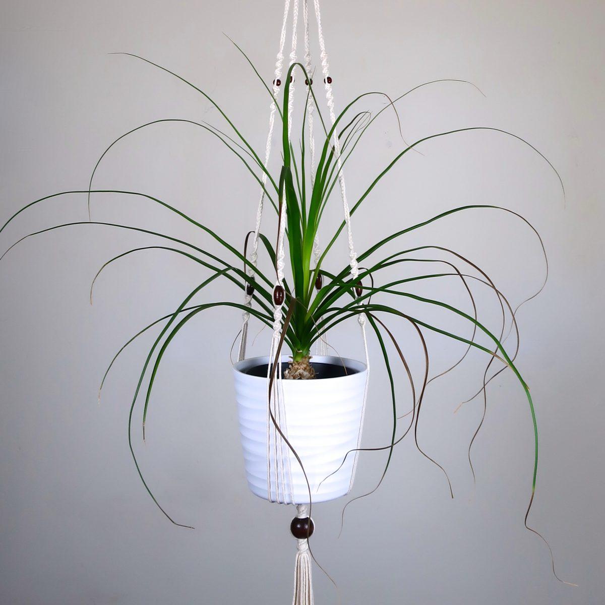 Suspension macramé pour plante d'intérieur