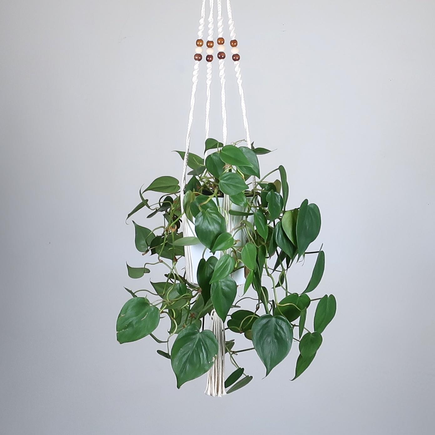 suspension pour plante en macram bymadjo saty d co. Black Bedroom Furniture Sets. Home Design Ideas